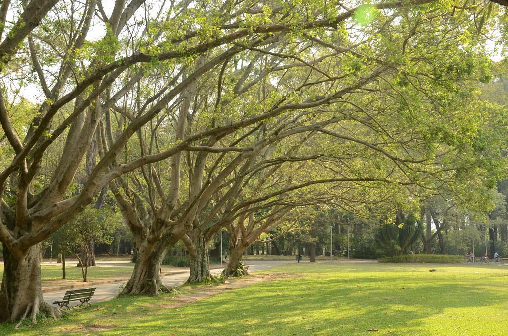 Resultado de imagem para parque de ibirapuera