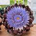 Artichoke Flower at Portland Farmers Market