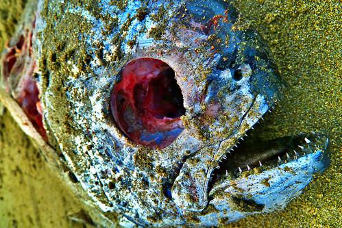 Plenty of fish amherst ns for Plenty of fish richmond va
