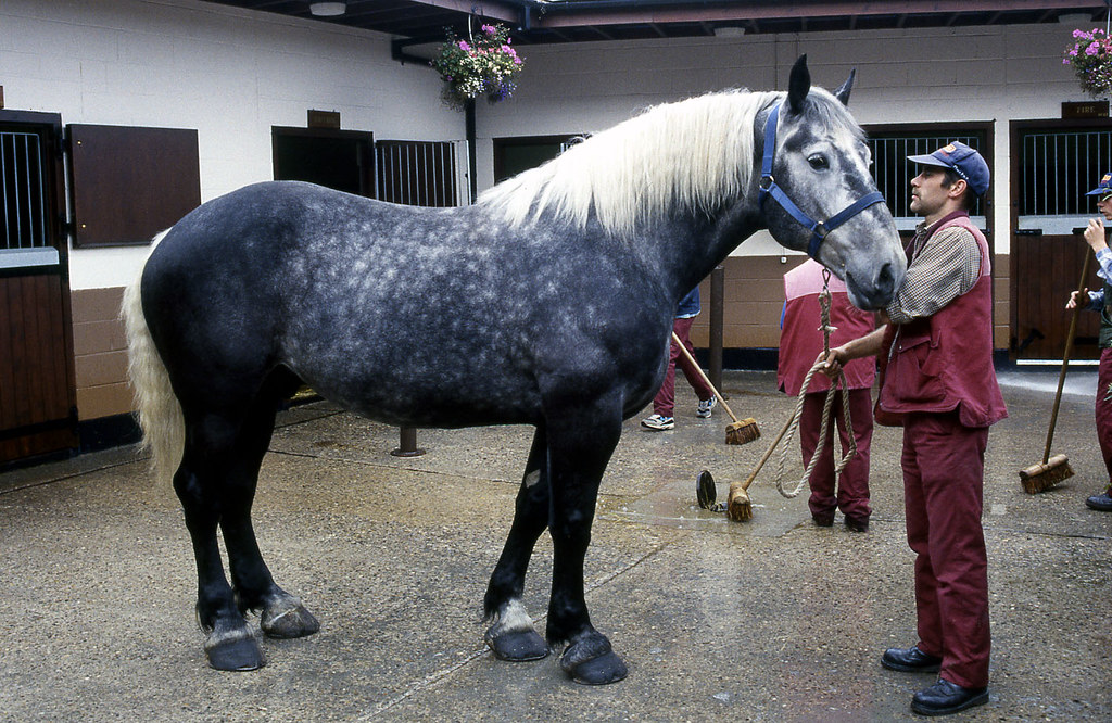 tynexwear sampson the horse vaux brewery stables sunderl flickr. Black Bedroom Furniture Sets. Home Design Ideas
