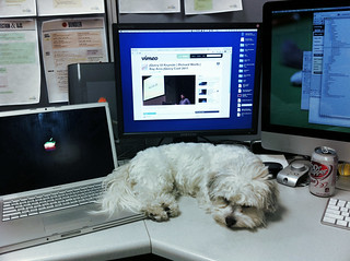 Sleepy puppy at dad's work | by silent (e)
