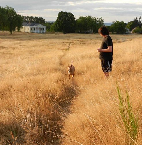 Here comes Rosie trotting up the trail! Nick Boseck standing in golden fields of grass, historical yellow building with 8 columns, trees, Discovery Park, Seattle, Washington, USA | by Wonderlane
