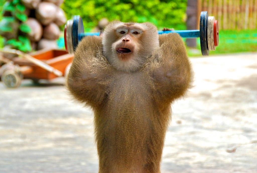 gym workout log