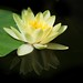 water lilies never let me down........
