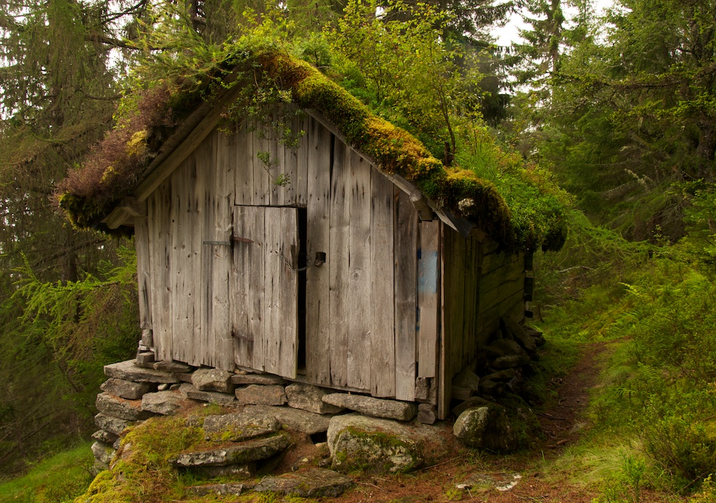 Forest Hut This Grass Roofed Hut Perched Alongside A