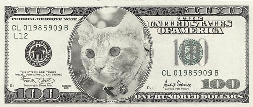 Baby Kat on a hundred dollar note | by stratman² (2 many pix!)