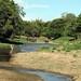River Elephants  Minneriya