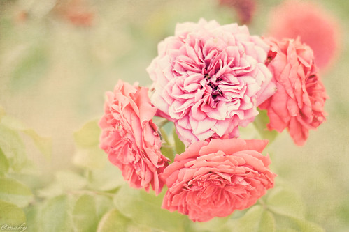 Day 28: Flowers {30 day photography challenge} | by Maky {Magdalena}