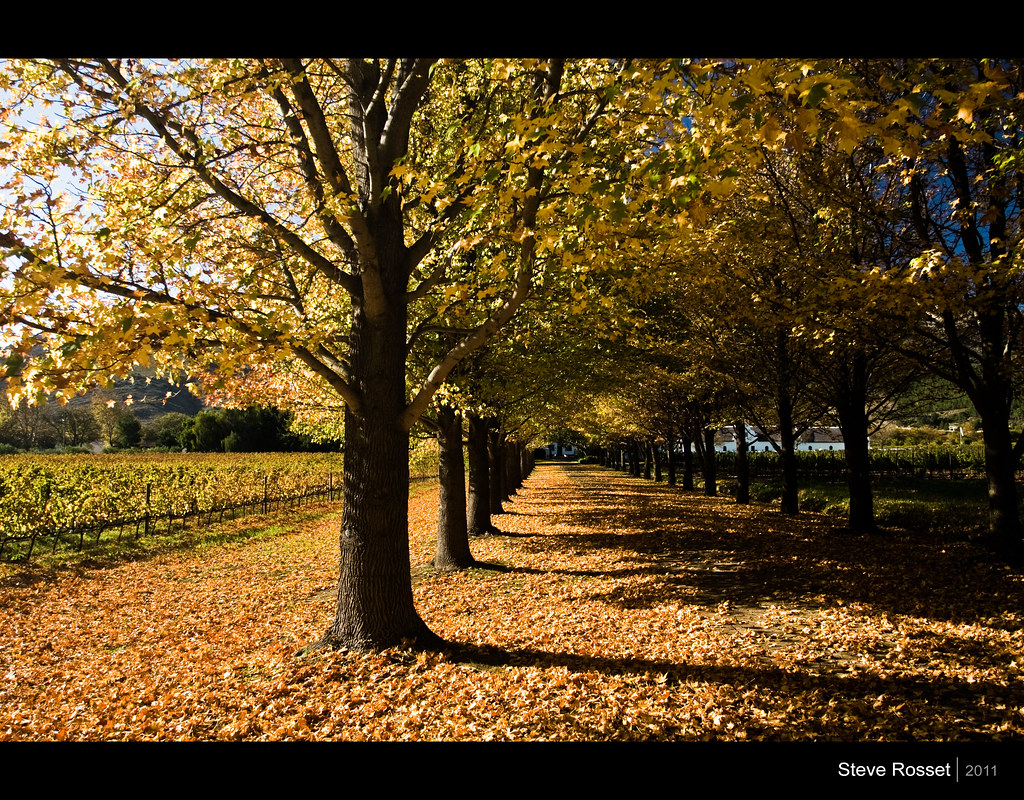 Autumn Leaves South Africa Set I Travel Collection I