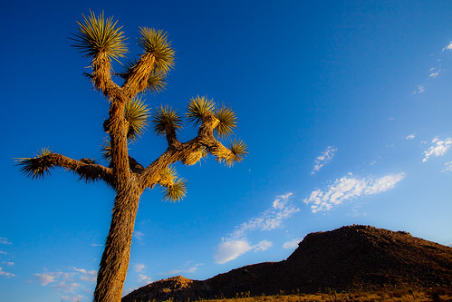 Joshua Tree National Park | by eleephotography