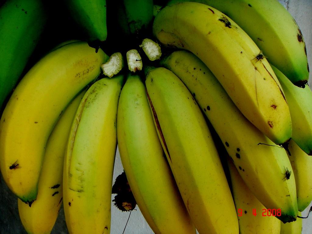musa acuminata colla  aaa group  cv   u0026 39 ambon putih u0026 39