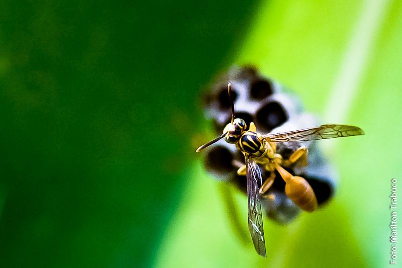 Uma foto uma hist ria vespa patriota j falei aqui for Revelar fotos baratas