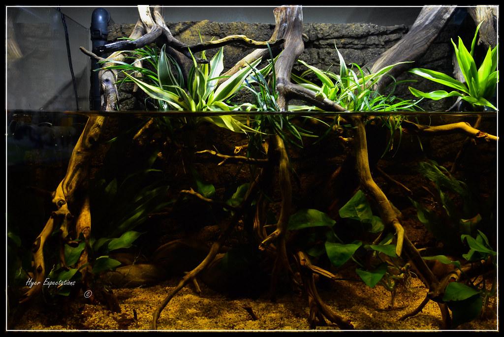 1326 amazon river bank biotope riparium ejpnj flickr for Amazon aquarium fish