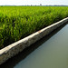 Rice and irrigation, Indonesia