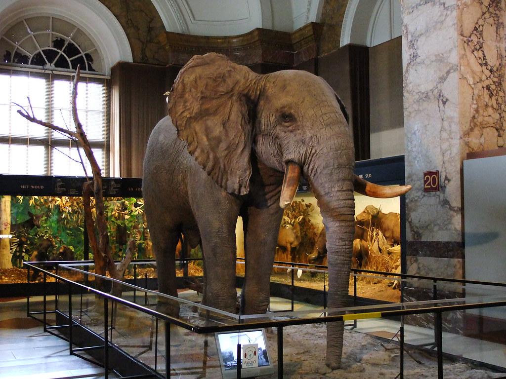 Royal Museum for Central Africa / Koninklijk Museum voor M ...