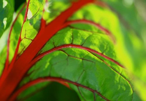 curvaceous chard | by naturalflow