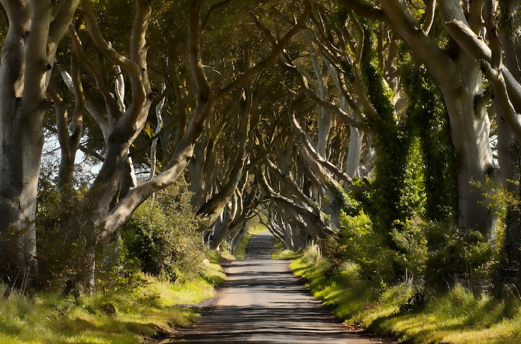 Dark Hedges..... Stranocum, County Antrim, Ireland