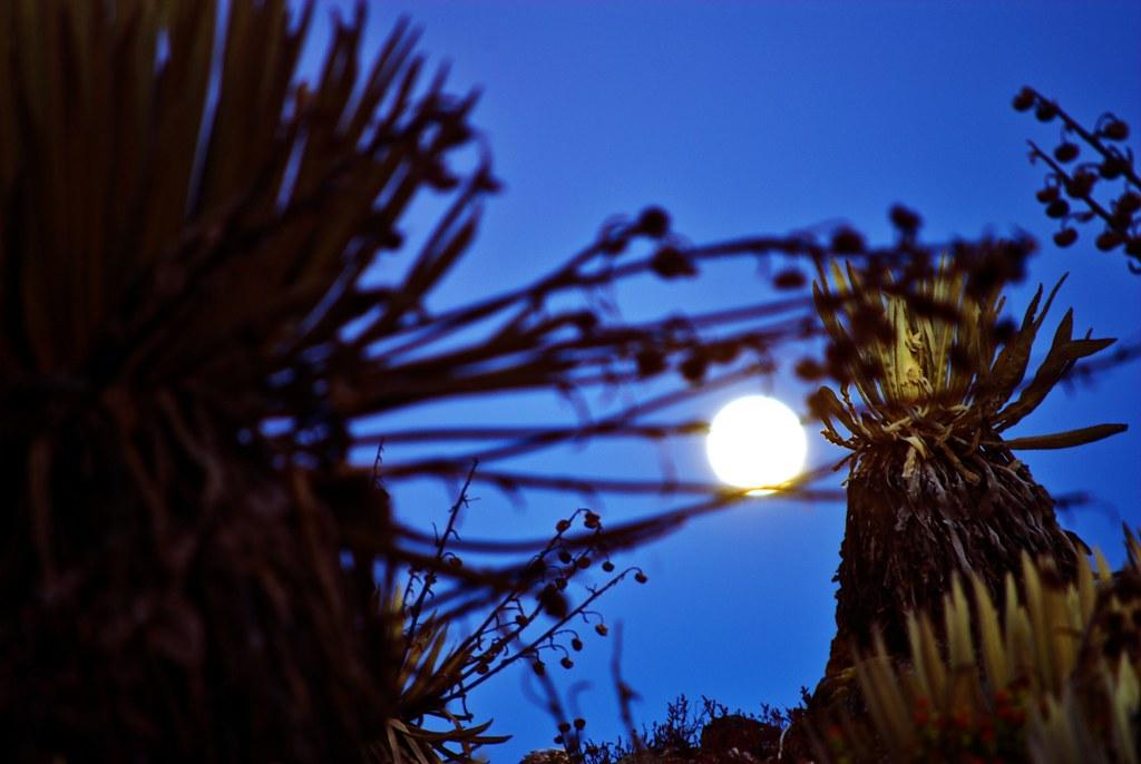 Luna entre frailejones