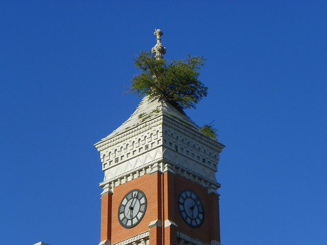Tree Growing From Court House Tower Flickr Photo Sharing