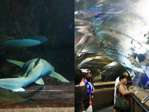 Sentosa Aquarium Shark and Tunnel | by Xiaolu // 6 Bittersweets