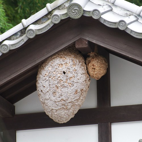 Japanese hornets nests | by julesberry2001
