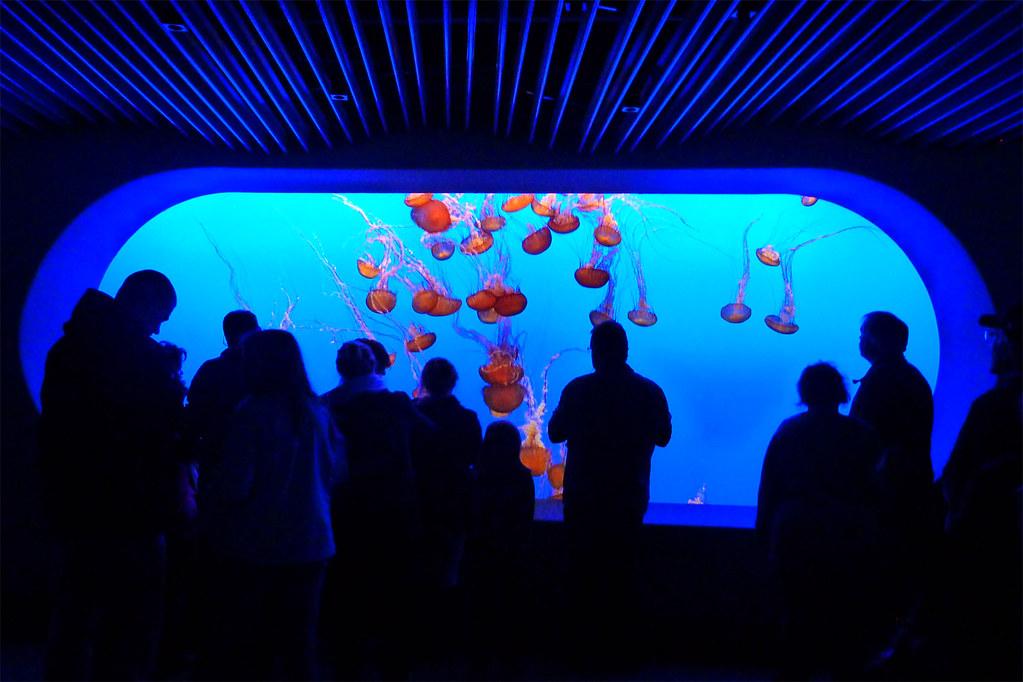 Jellyfish Tank Monterey Bay Aquarium California John