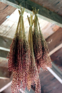 Herbs Drying | by macroscopicentric