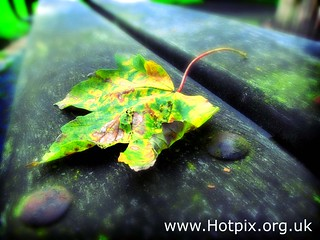 iPod Shuffle2 - Autumn Shade | by @HotpixUK -Add Me On Ipernity 500px