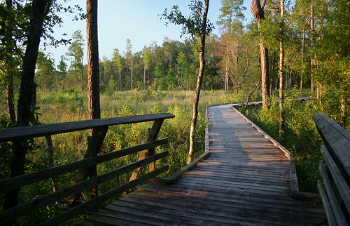 Boardwalk at the Flatwoods | by Lana Gramlich