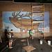 Living Walls (The Elk) - Albany, NY - 2011, Sep - 01.jpg
