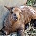 Random lamb snaps 2 - lambing season 2011
