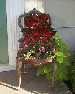 My Antique Chair-Turned-Planter | by The T-Cozy