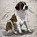 Illustration of a swiss St Bernard Mountain Dog
