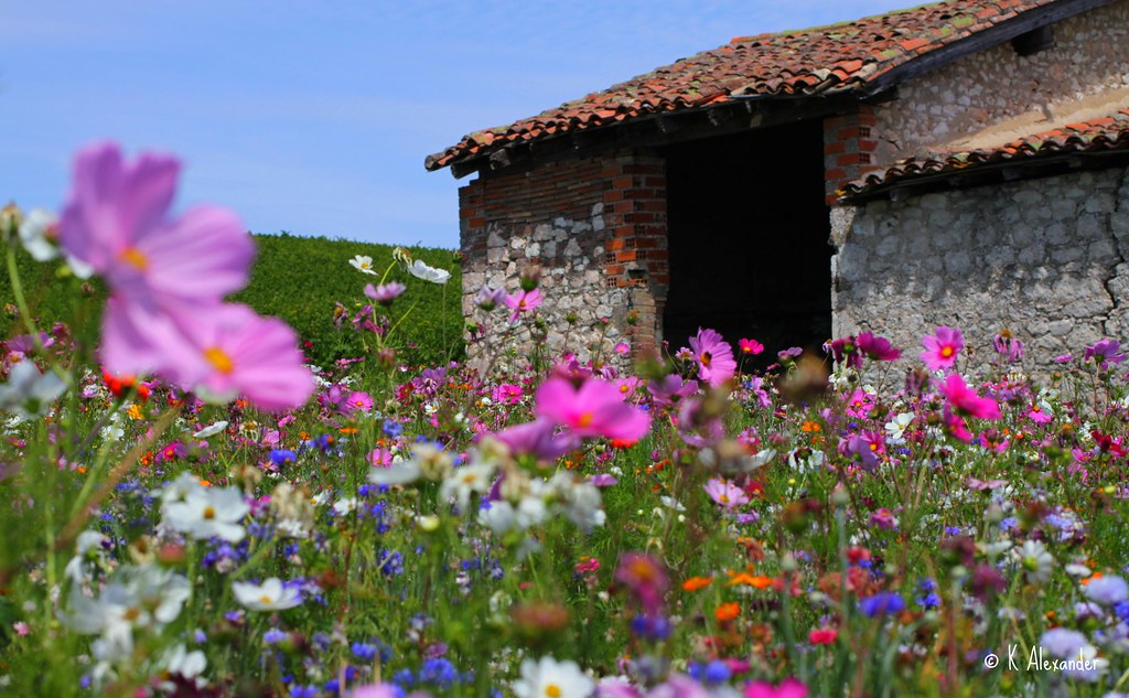 Our Blog >> Field of Wild Flowers | CASTLENAU DE MONTMIRAL, FRANCE ...