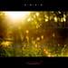 Light Thru Woods, 2011  1
