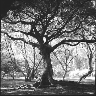 Rooted in Cubbon | by Penelope's Loom