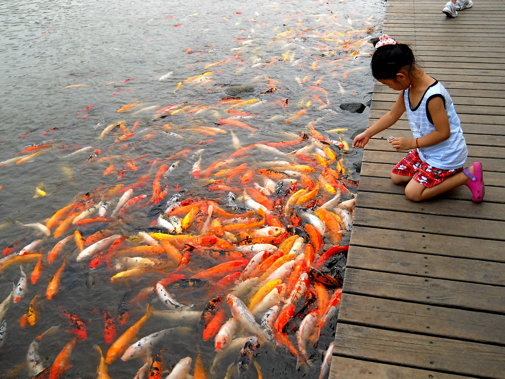 Feeding fish frances fu flickr for How to feed fish