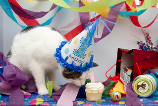 Kokomo's first birthday!! | by Jenn W (Jenn Wilson Pet Portraiture)