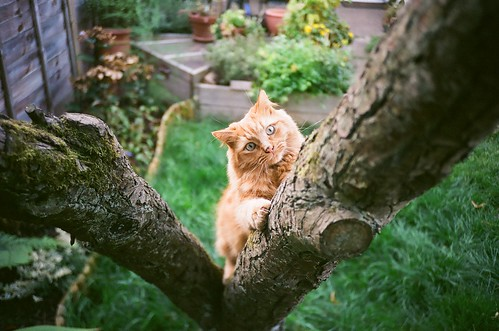 In My Tree | by Cloni