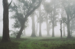 Those Foggy Days | by Martin Castro