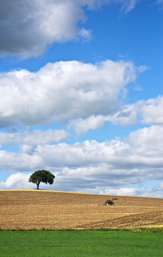 Lonely Tree | by Felix van de Gein