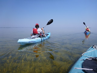 Kayaking in St. Joseph Bay | by wfsu.org