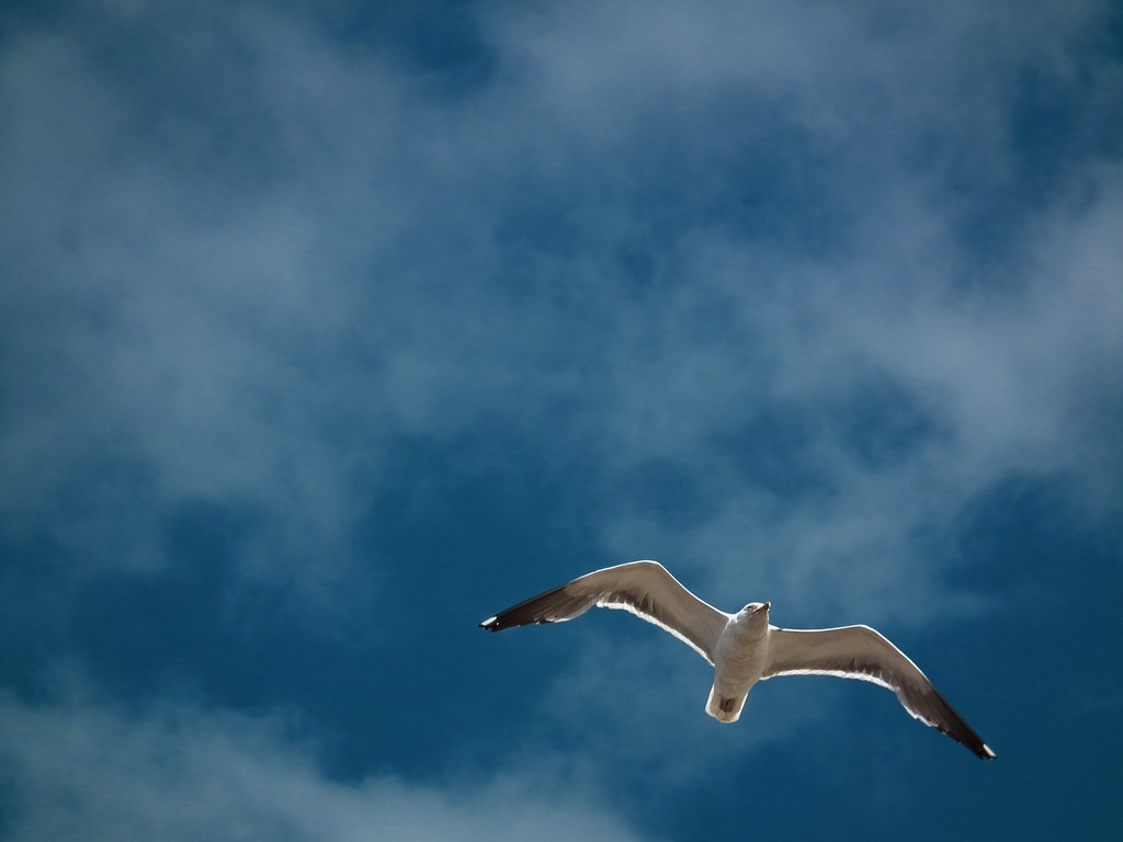 birds flying high, you know how I feel. | Real simple, old ... - photo#15