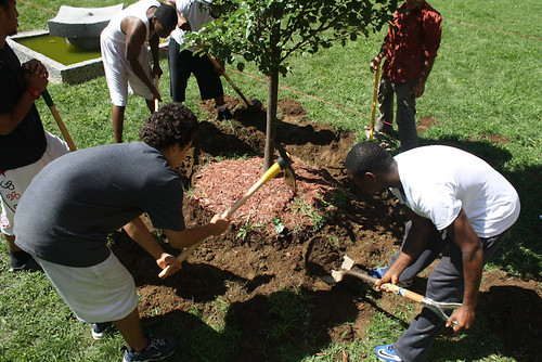 Planting a Pear Tree | by The Hort