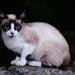 Feral Cat #3