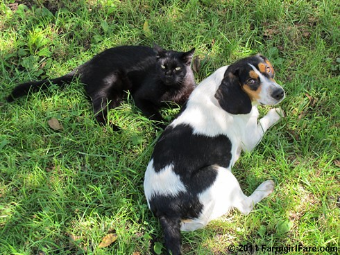 Bert and Mr. Midnight hanging out in the yard 1 | by Farmgirl Susan