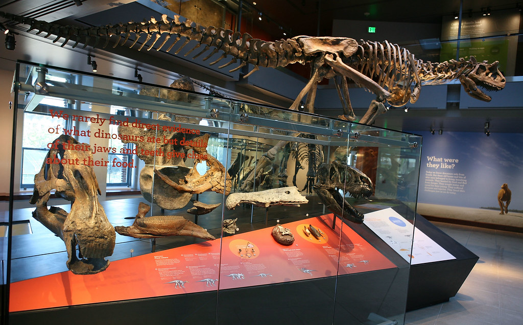 Los Angeles County Museum Of Natural History Jobs