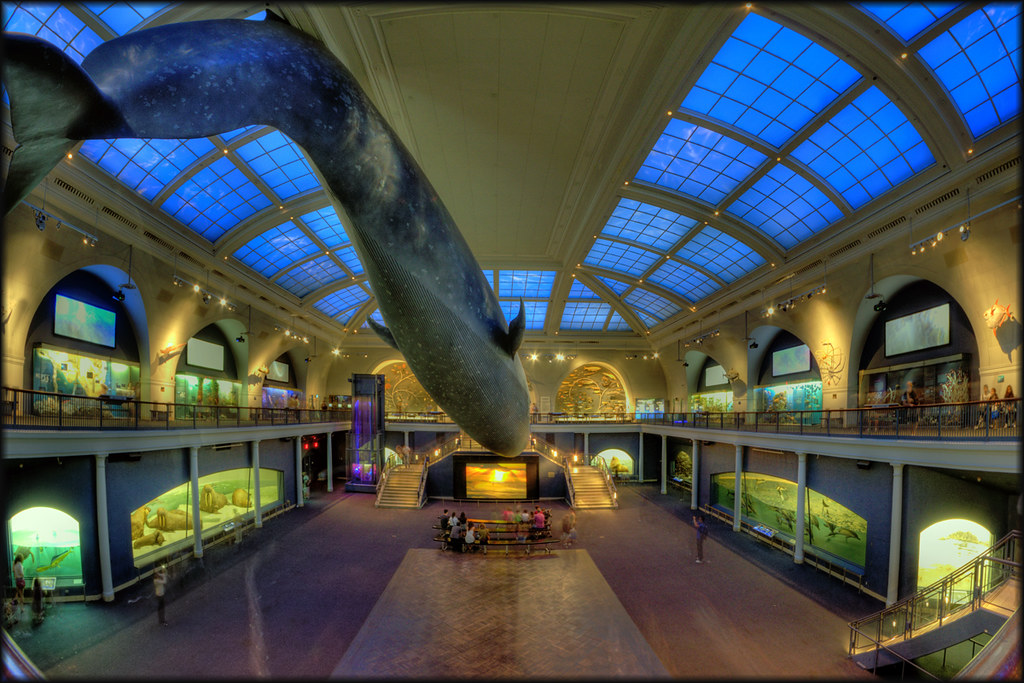 Jobs At The Museum Of Natural History New York