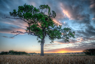 Sunrise Under a Tree | by Lapse of the Shutter