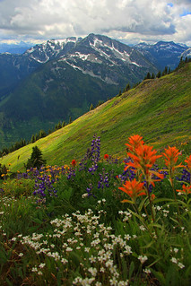 Rolling Mountain Meadow | by justb